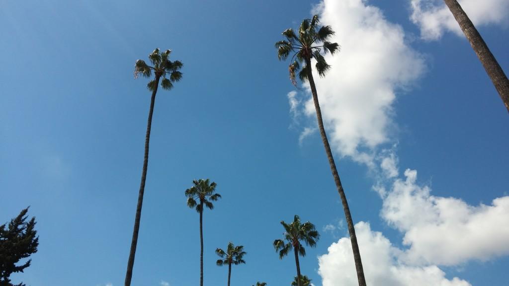 En obligatorisk palmbild får avsluta för denna gång!